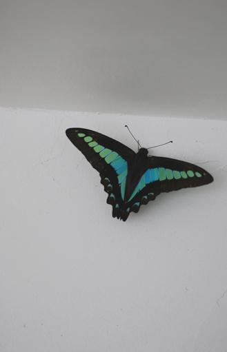 ブルーの蝶々_f0179528_23301550.jpg
