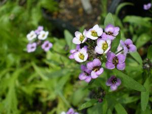 グリーンスティックの花が咲きました!_e0105047_15113454.jpg