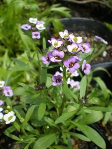 グリーンスティックの花が咲きました!_e0105047_1512046.jpg