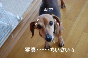 b0112758_20113386.jpg