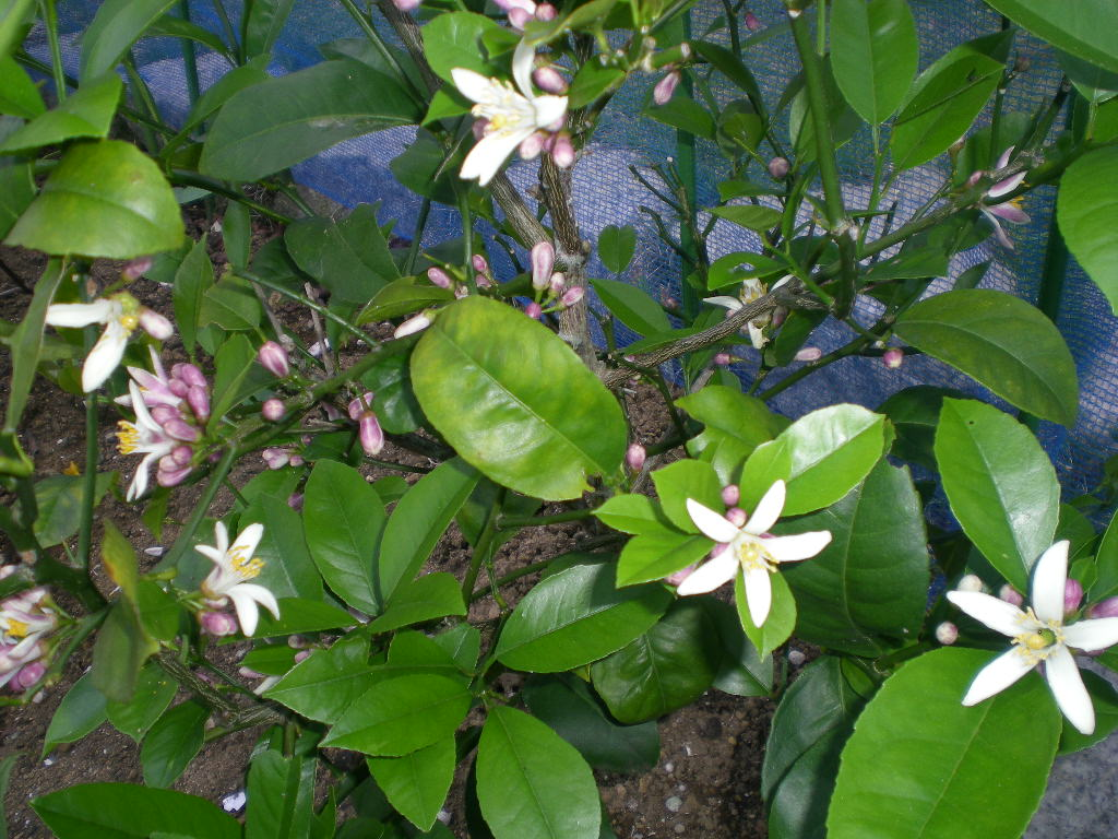5月13日(水)バラと草取りと!_f0060461_20461363.jpg