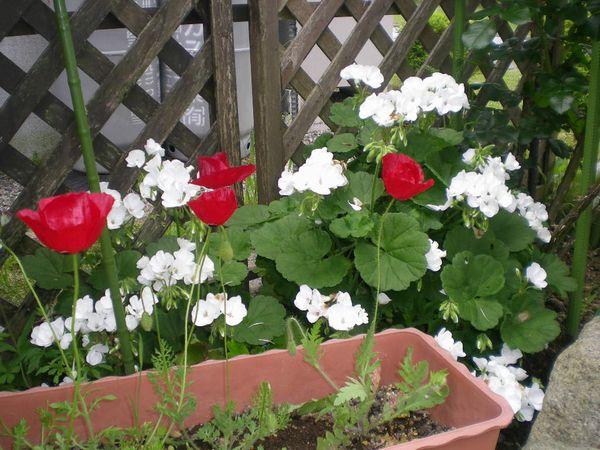 5月13日(水)バラと草取りと!_f0060461_20492956.jpg