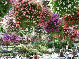 掛川花鳥園 その一_f0139963_6455922.jpg