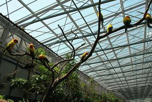 掛川花鳥園 その一_f0139963_6521555.jpg