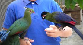 掛川花鳥園 その一_f0139963_6525252.jpg