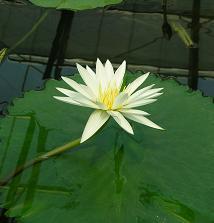掛川花鳥園 その一_f0139963_6582585.jpg