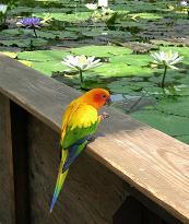 掛川花鳥園 その一_f0139963_701547.jpg