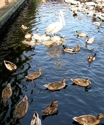 掛川花鳥園 その一_f0139963_79258.jpg