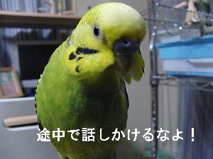 f0196665_0502592.jpg