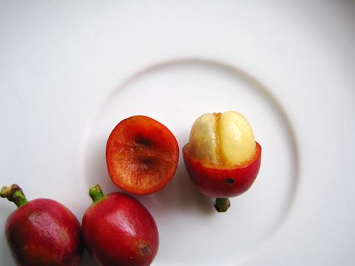 コーヒーの果実(コーヒーチェリー)の果肉を半分とったところ