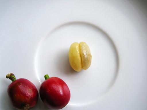 コーヒーの果実(コーヒーチェリー)の果肉を完全に取り去ったところ