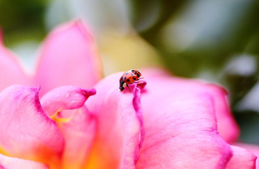 Ladybird_f0195893_6443233.jpg