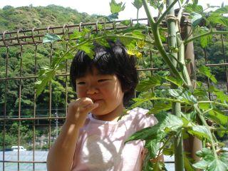 KOHさん復活! & マコちゃんトマト!!_e0166301_22581988.jpg