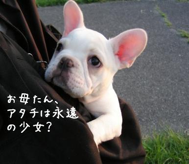 f0068501_22394420.jpg
