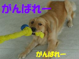 f0170713_10463793.jpg