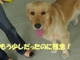 f0170713_10465558.jpg