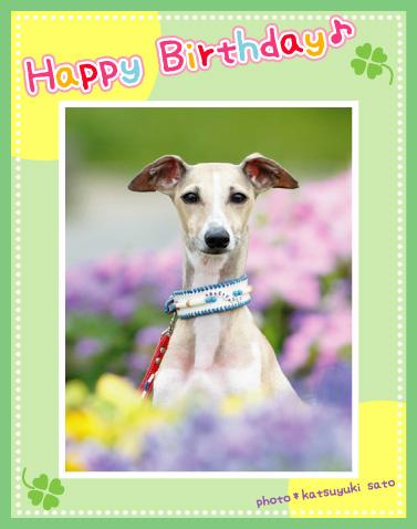 ビーゴくん、お誕生日おめでとう♪_d0102523_12571053.jpg