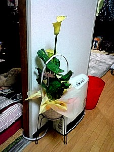 母の日はお花やさんが大忙し #350_e0068533_2321597.jpg
