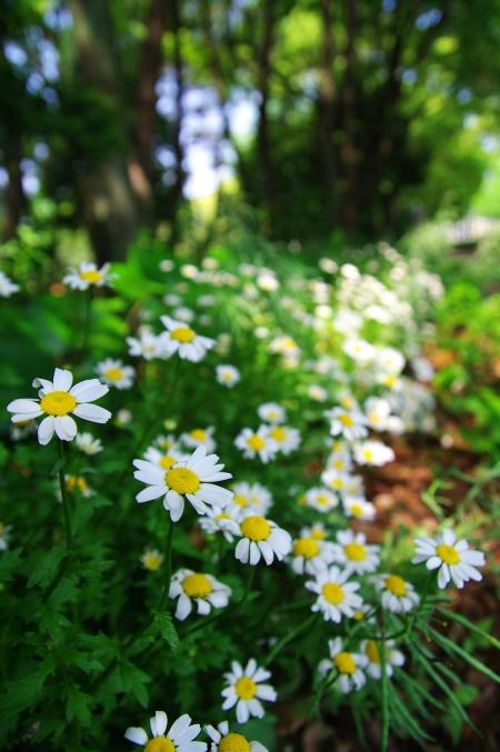まぶしい陽ざし 5月の鶴舞公園で_d0145934_19354614.jpg