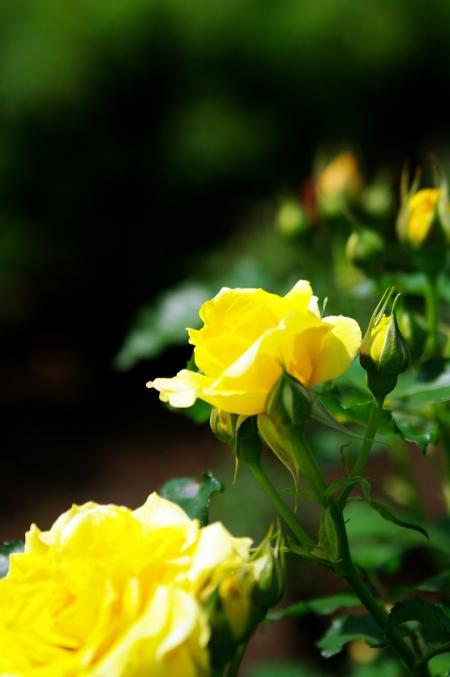 まぶしい陽ざし 5月の鶴舞公園で_d0145934_19402529.jpg