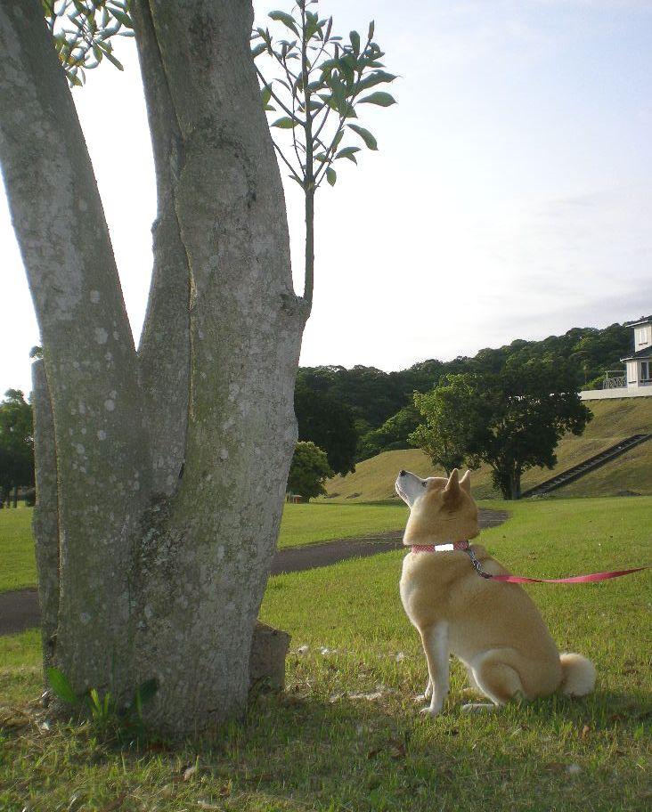 2009年5月14日(木)薔薇と受難のこころちゃん!!_f0060461_2136643.jpg