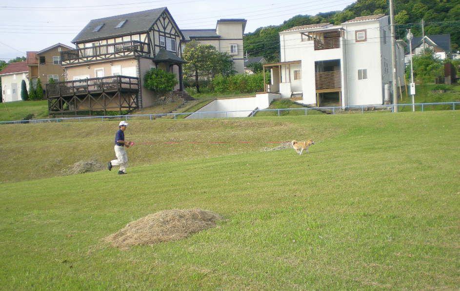 2009年5月14日(木)薔薇と受難のこころちゃん!!_f0060461_21403617.jpg