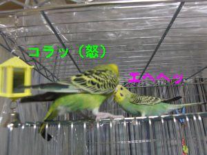 f0196665_181782.jpg