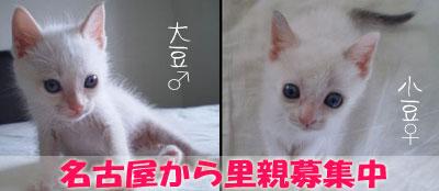 名古屋から子猫の里親さま決まりました_a0064067_13471598.jpg