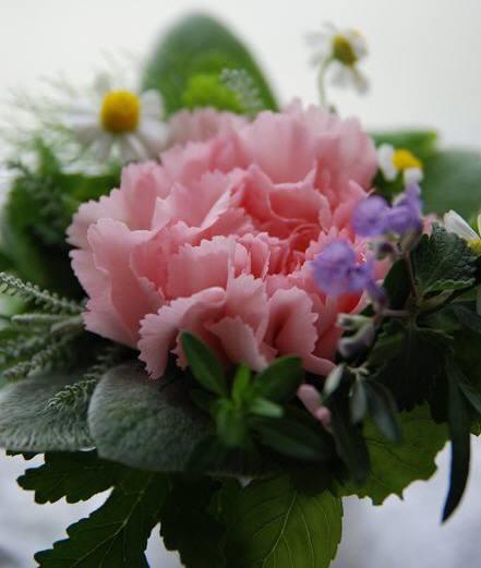 ハーブの花束 ~タッジーマッジー~_c0147770_16423280.jpg
