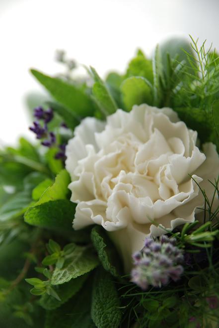 ハーブの花束 ~タッジーマッジー~_c0147770_16524971.jpg
