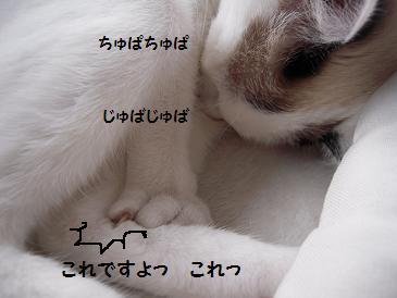 c0139488_1565465.jpg
