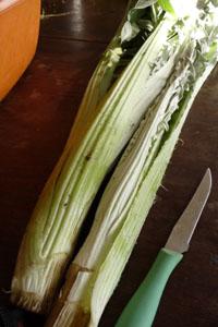 畑の便利野菜カルドの下準備_f0106597_1646553.jpg