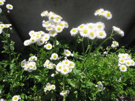 雑草という植物はない_d0138618_1462382.jpg