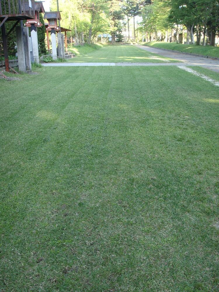 芝刈り_c0111229_19251499.jpg