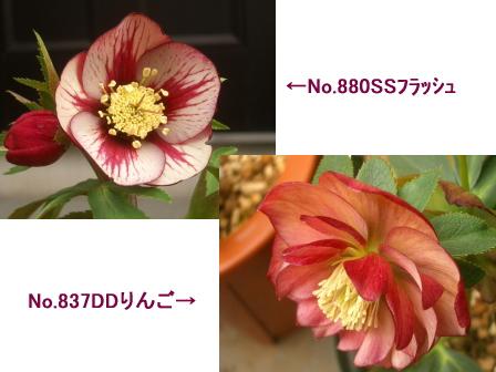 c0025140_163688.jpg