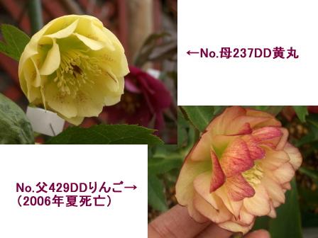 c0025140_16462973.jpg