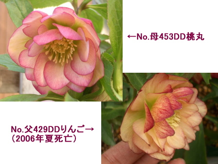 c0025140_16521626.jpg