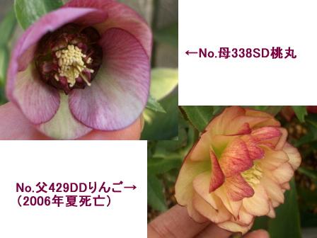 c0025140_16554378.jpg