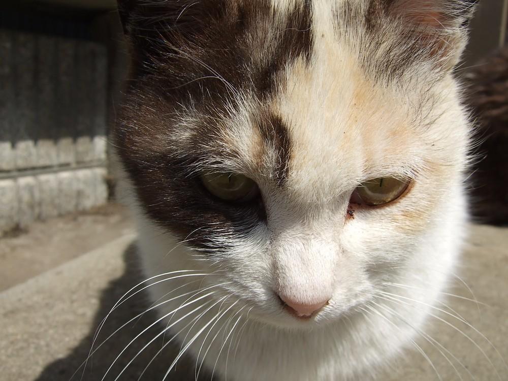 ネコ、朝の挨拶_d0001843_1047369.jpg