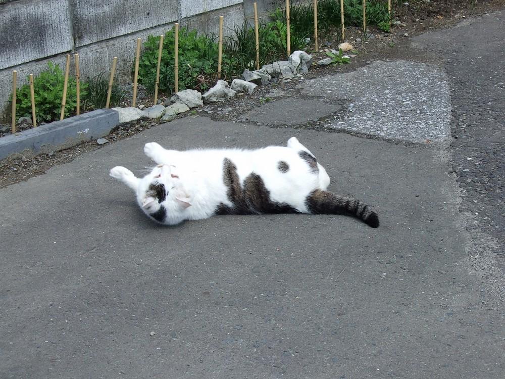 ネコ、朝の挨拶_d0001843_10483184.jpg