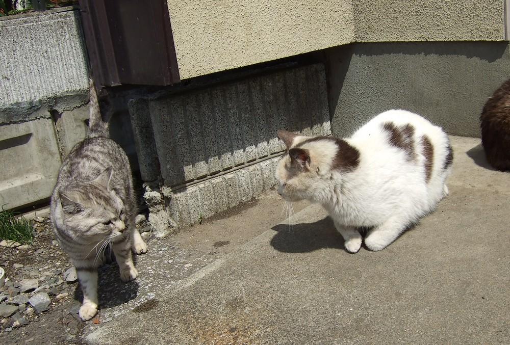 ネコ、朝の挨拶_d0001843_1122410.jpg
