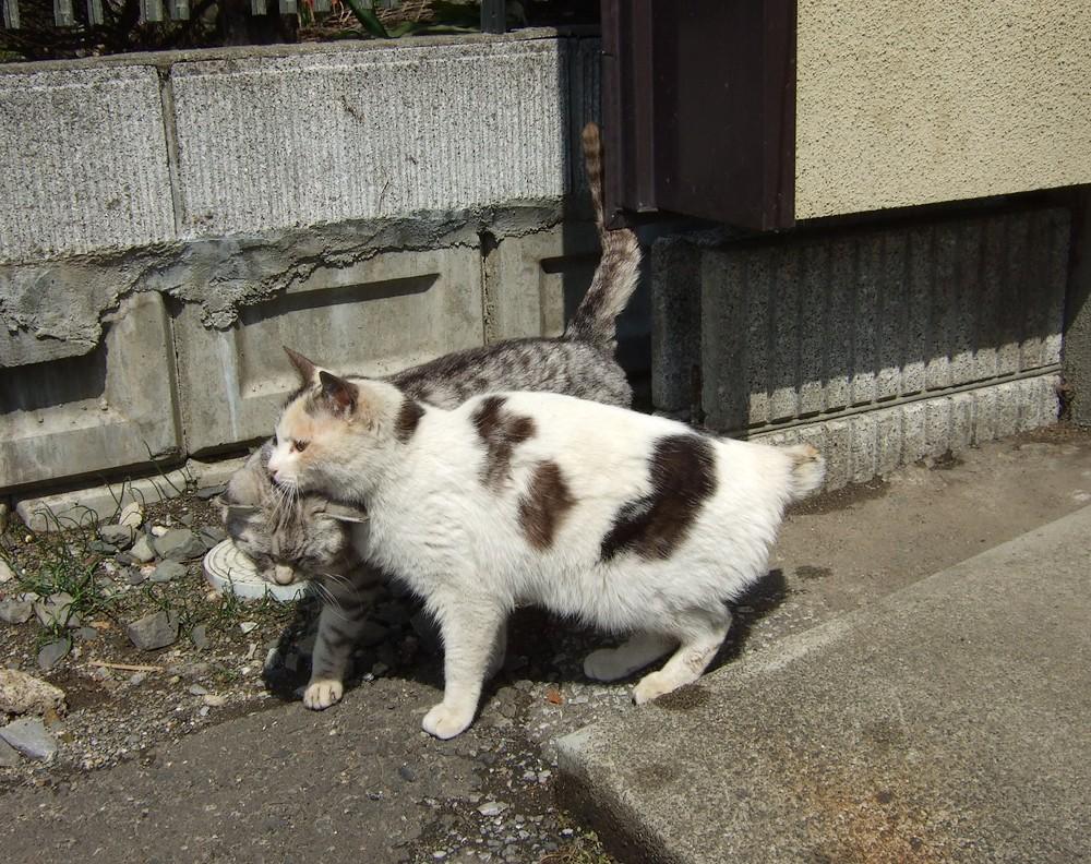 ネコ、朝の挨拶_d0001843_1124699.jpg