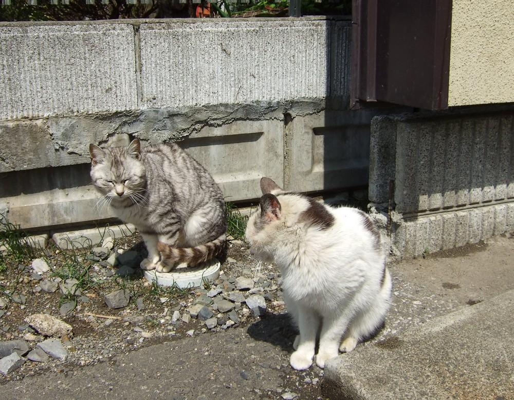 ネコ、朝の挨拶_d0001843_1131672.jpg