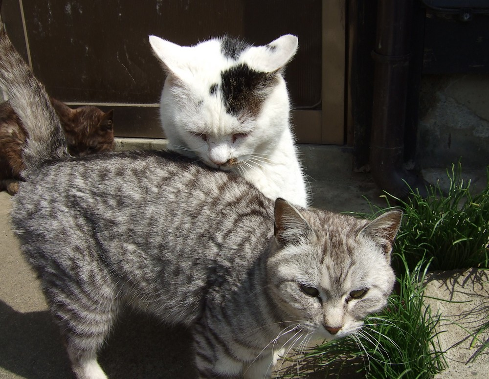 ネコ、朝の挨拶_d0001843_113781.jpg