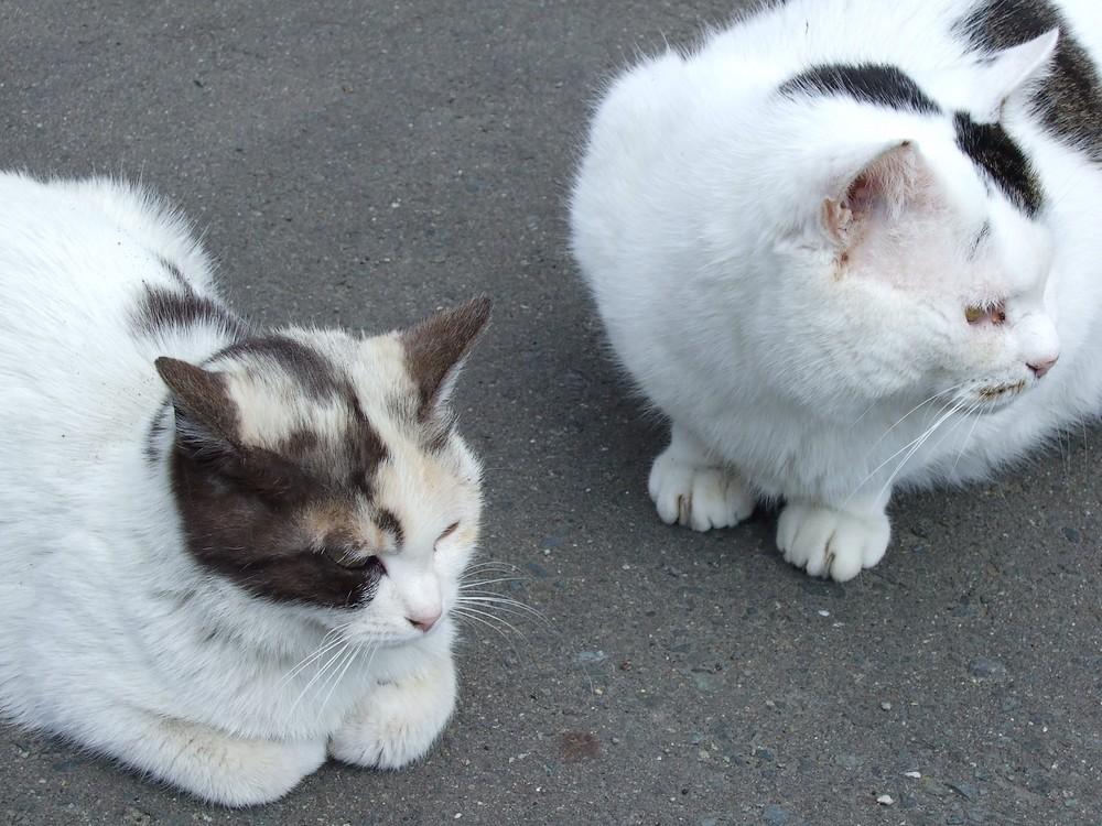 ネコ、朝の挨拶_d0001843_1151555.jpg