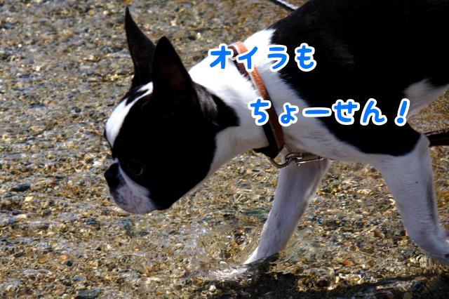 f0166359_15461262.jpg
