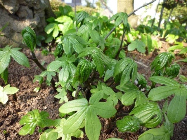庭の植物…_b0093660_0375088.jpg