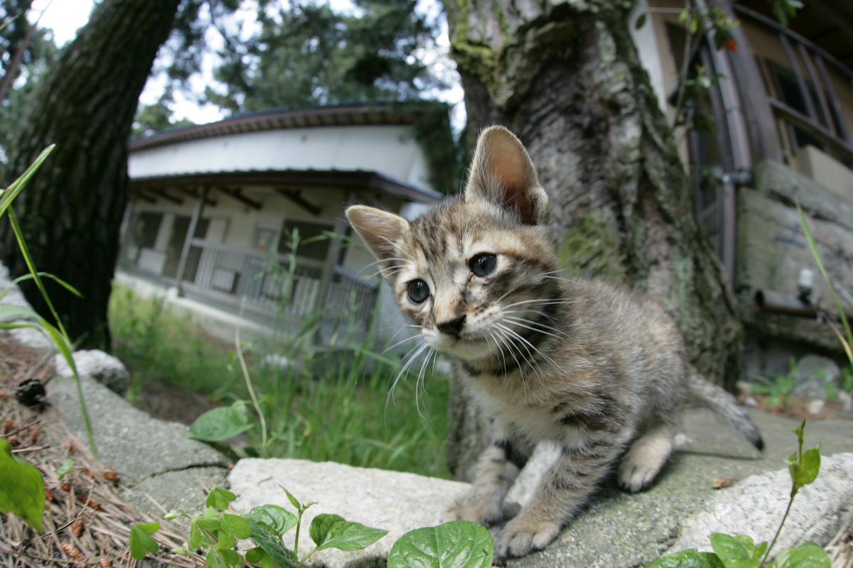 猫にゃん 1_f0021869_23503128.jpg