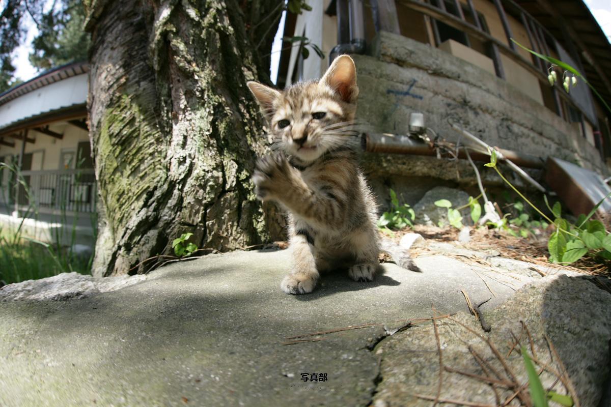 猫にゃん 1_f0021869_2350928.jpg