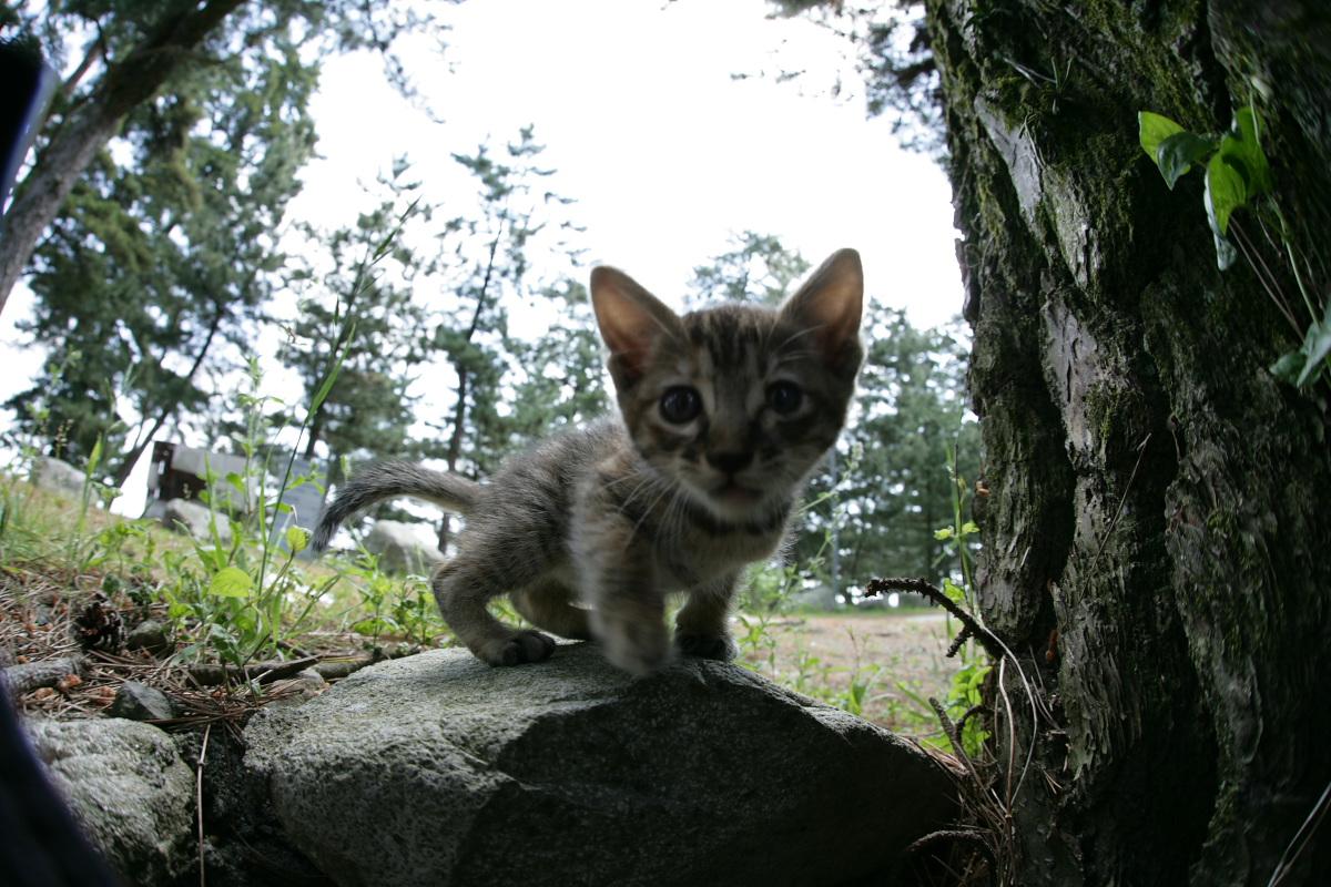 猫にゃん 1_f0021869_2351051.jpg